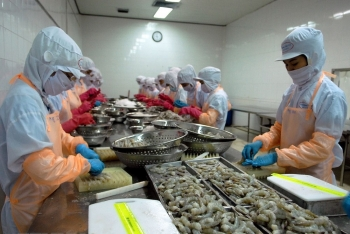 vietnams shrimp exports expect to surge this year