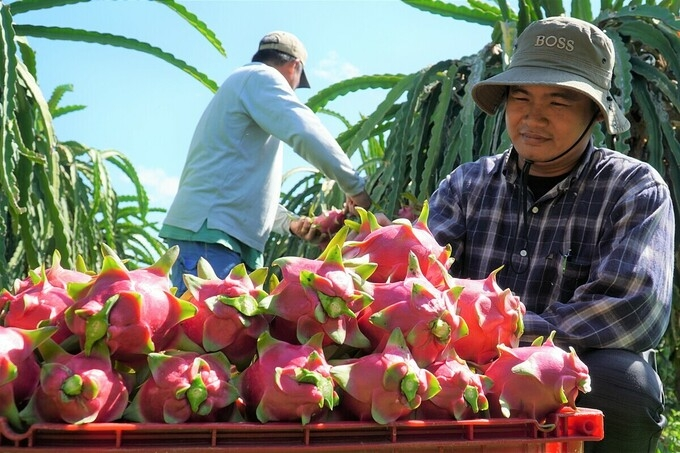 vietnams fruit and vegetables exports to thailand surged 230