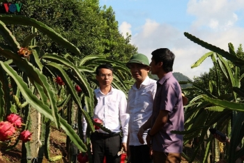 vietnamese red dragon fruit exported to the russian market