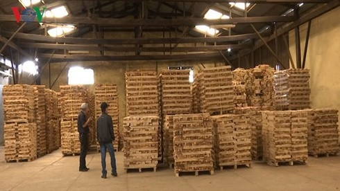 vietnams wood exports surged over 6 in 7 months