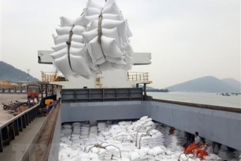 vietnams rice exports to africa keep increasing