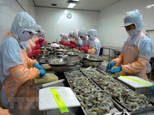 vietnamese shrimp export to the us up 29 in h1