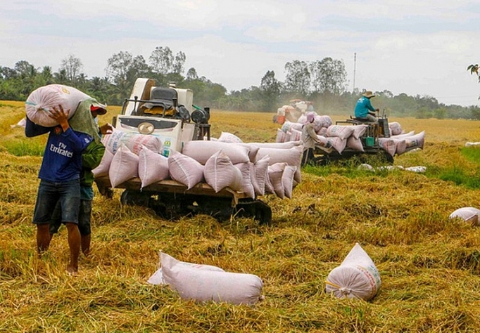 vietnamese rice prices ranked highest in the world