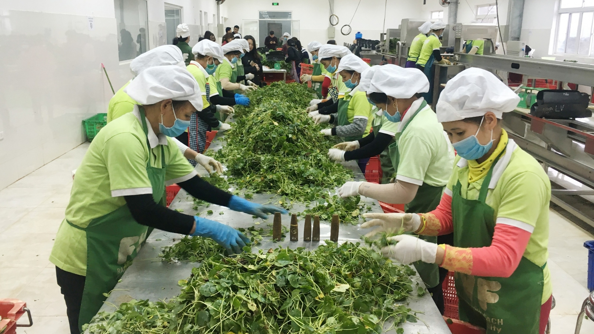vietnamese farming exports reach us 261 billion over the past eight months