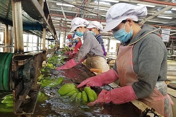 Vietnamese fruit and vegetable businesses seek to meet global demands
