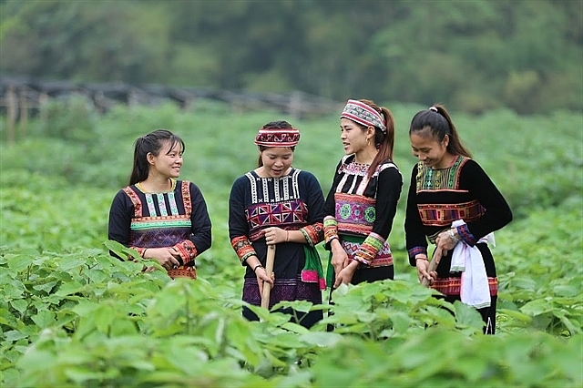New crop to benefit ethnic minority woman and keep families together
