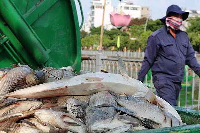 Dead fish collected from the Nhieu Loc - Thi Nghe Canal in the afternoon May 17, 2016. Photos: Duc TIen/Thanh Nien