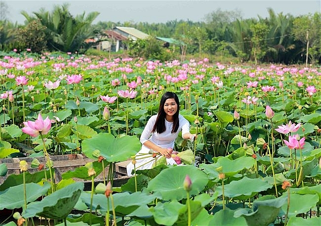 Lotus season in full swing in Saigon's town
