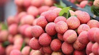 vietnams litchi qualified to prevail the strictest market in the world