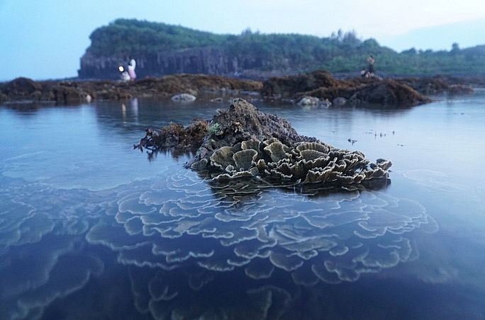 absorbing beautiful masterpieces of coral reefs in ganh yen quang ngai province