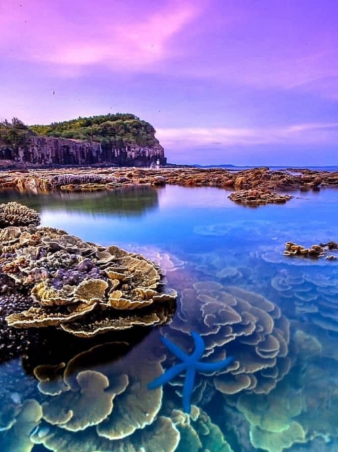Absorbing beautiful masterpieces of coral reefs in Ganh Yen, Quang Ngai Province