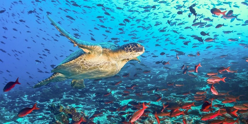 a massive chinese fishing fleet is under surveillance near galapagos over ecological concerns