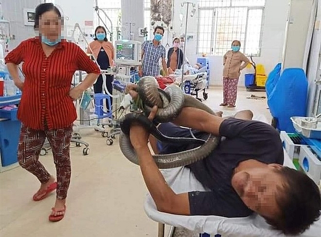 Vietnamese man rushes to hospital with his hand stuck by a 3-meter-long king cobra