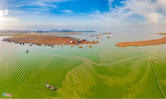 absorbing impressive green algae season in tri an lake