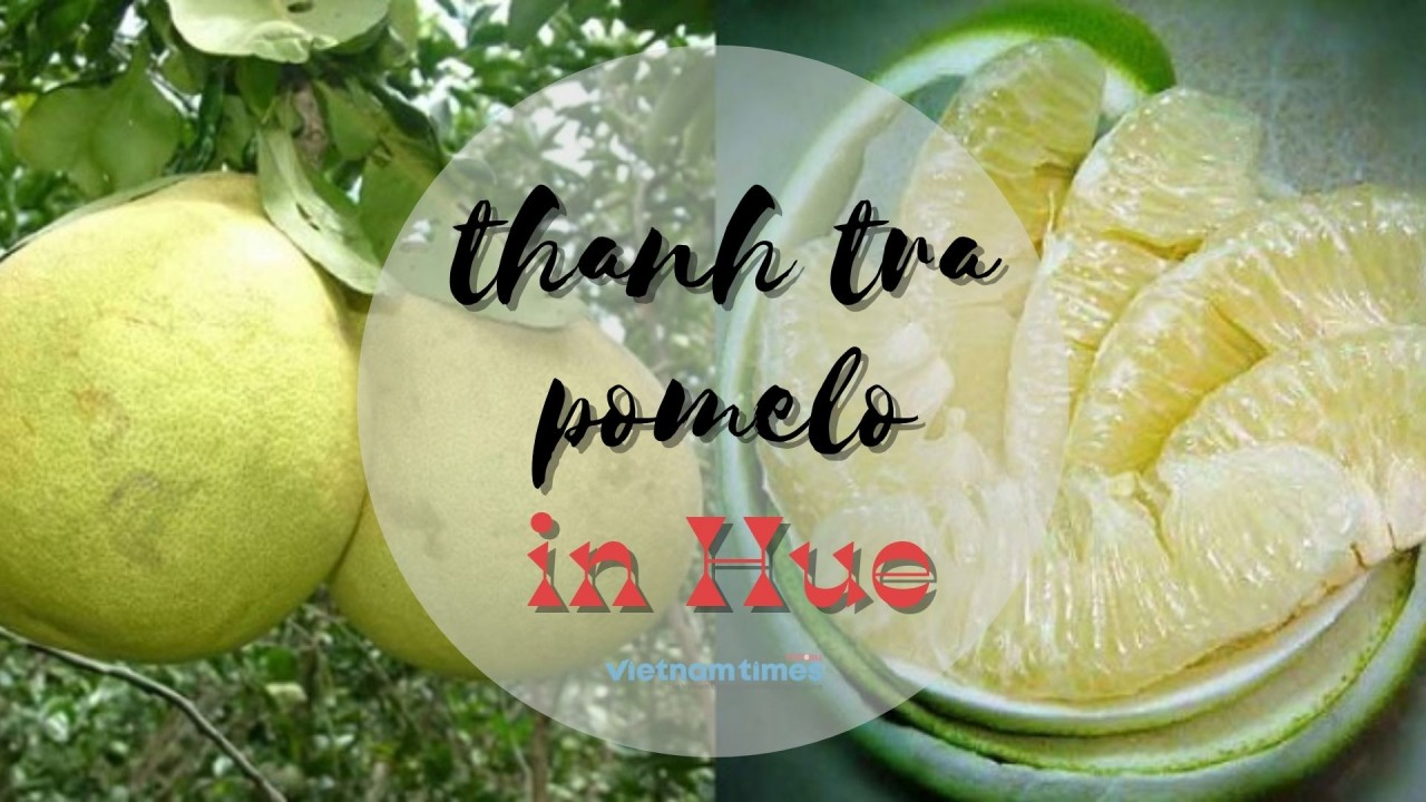Thanh Tra Pomelo: A Distinctive, Symbolic Taste of Hue