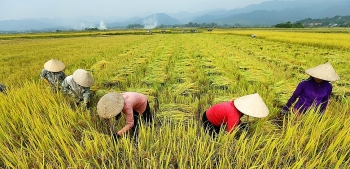 vietnams agriculture sector targets 40 billion export