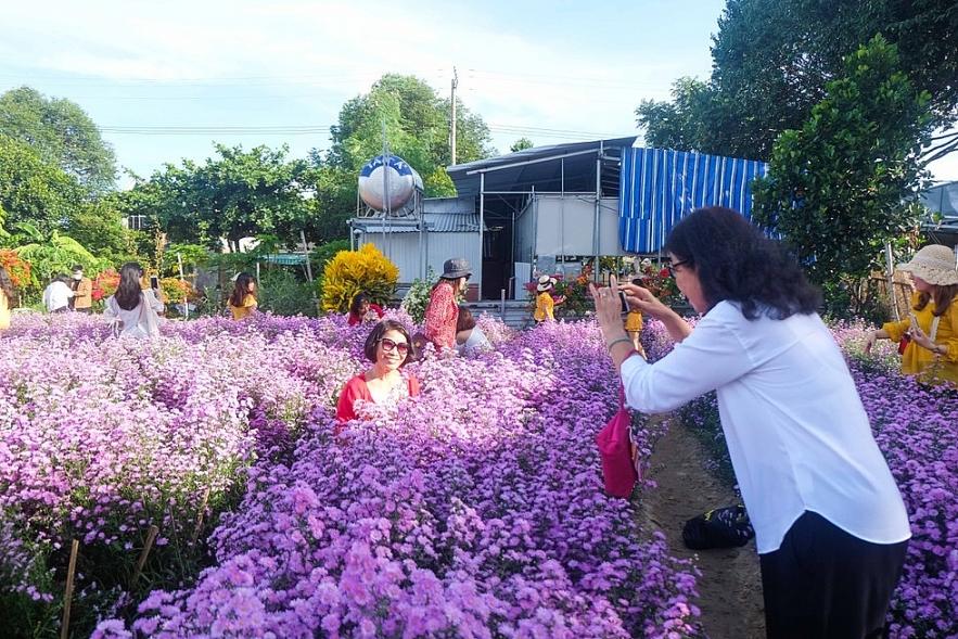beautiful photographing da nangs first aster amellus garden