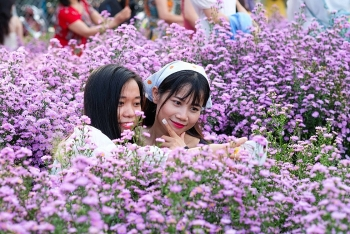 Beautiful photographing Da Nang's first aster amellus garden