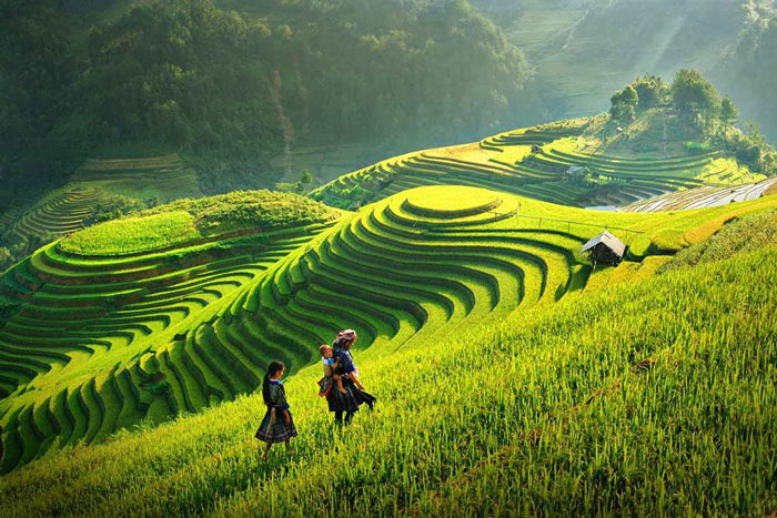 Top Vietnam Destinations: The reason why Sa Pa and Ninh Binh named among most attractive destinations in Asia