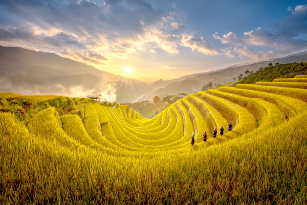 Yen Bai warms up Mu Cang Chai Terraced Field Festival