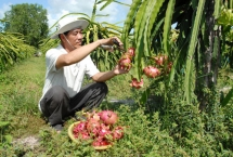 agricultural product export in bustle back to chinese market