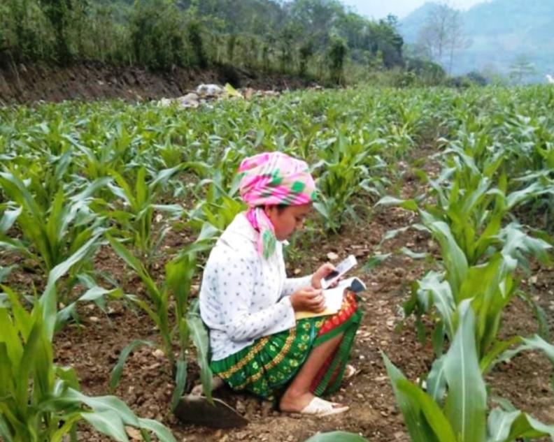 vietnam ethnic students make shacks on hills for e learning