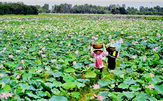 The Embassy of Bulgaria funds a Vietnamese project of Lotus, an opportunity for rural women's development