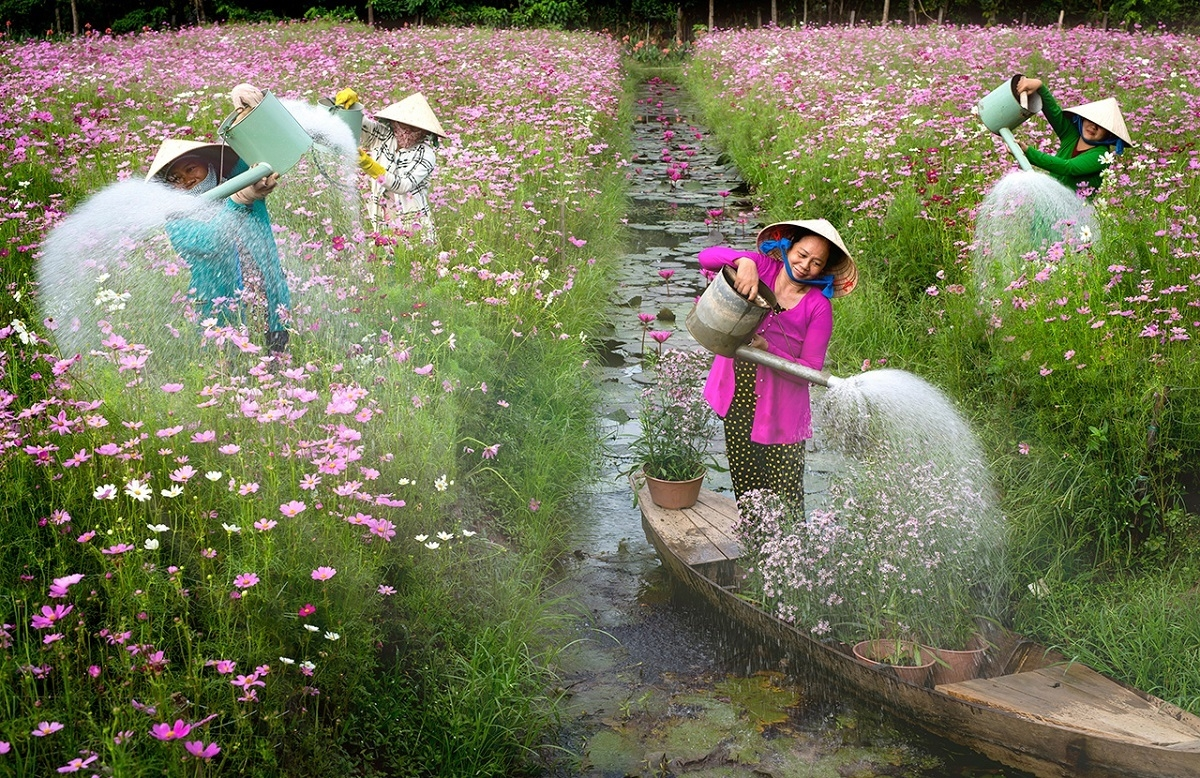 vietnam s water lily season photo won the international competitions first prize