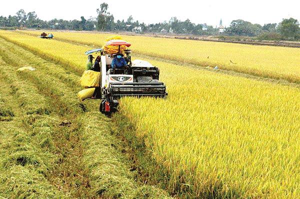 Vietnam and Switzerland extend project on rice monitoring and crop insurance