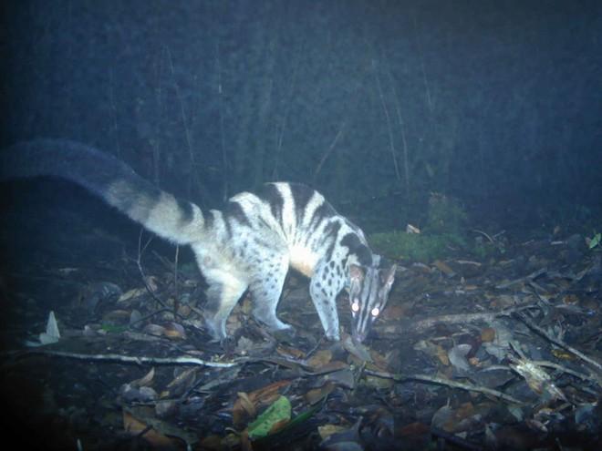 many rare species animals found in nui ba vietnam