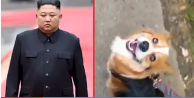 North Korean leader orders pet dogs to be confiscated in the capital amid food shortage