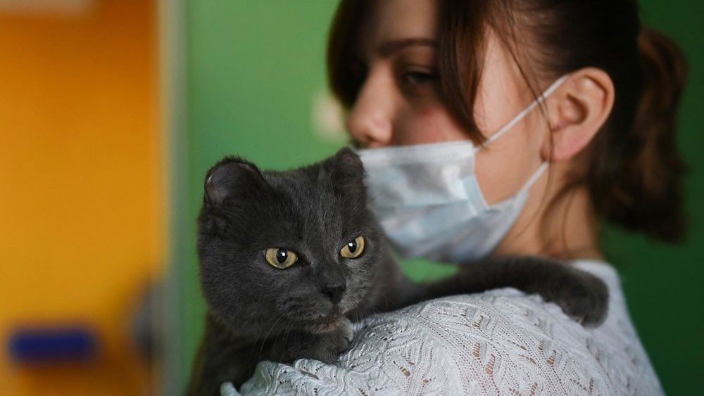 Covid-19 Patients Warn of Pets And How To Care Your Pets During Pandemic