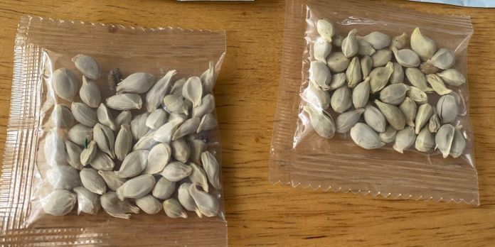 Amazon bans imported seeds entering U.S. amid mystery packages