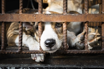 one million signatures with effort to end the dog and cat meat trade in southeast asia