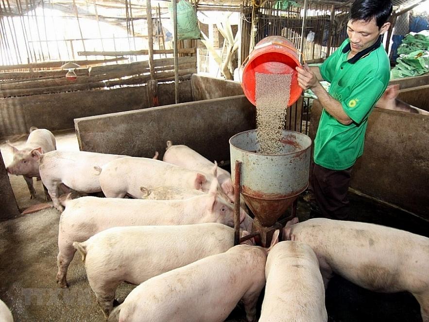 Vietnamese enterprises advised to export pigs to Cambodia