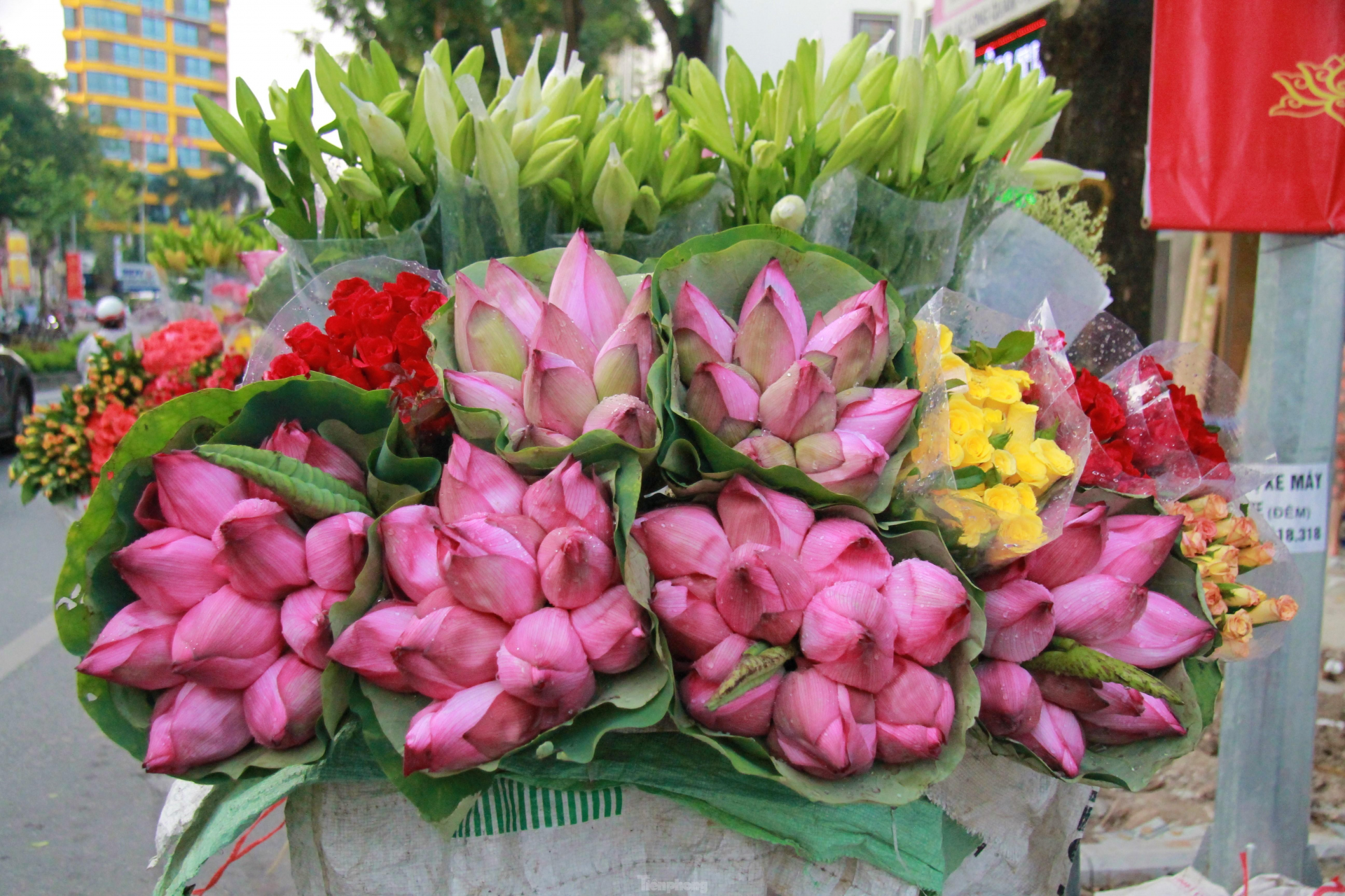 In photo: The vibrant colors of lotus blossom on Hanoi streets