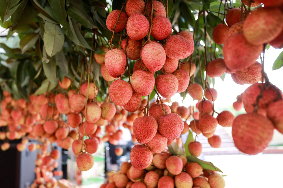 Bac Giang lychees on the way to Japan