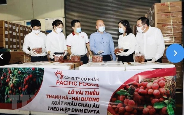 Pacific Foods exports first batch of Thanh Ha lychees to EU. Photo: VNA