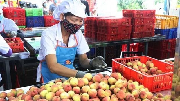 Vietnam News Today (June 15):
