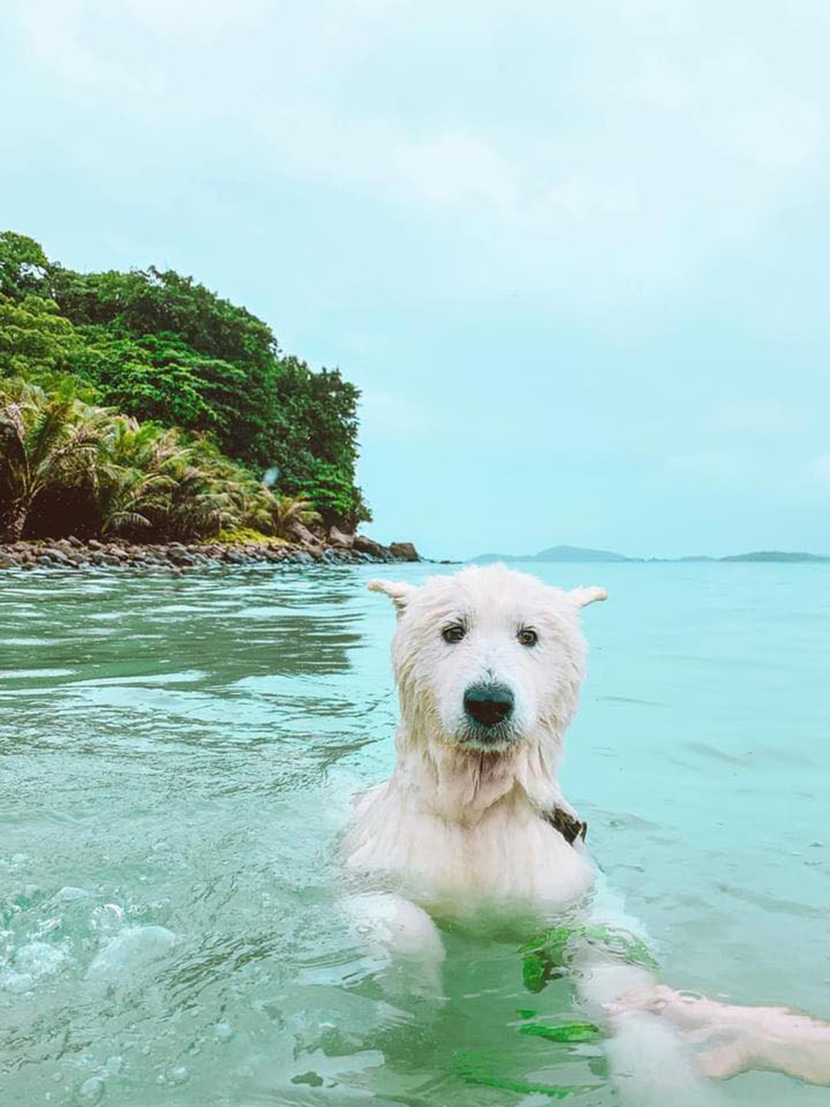 It's a dog's life: crazy canine travels across Vietnam's southern beaches