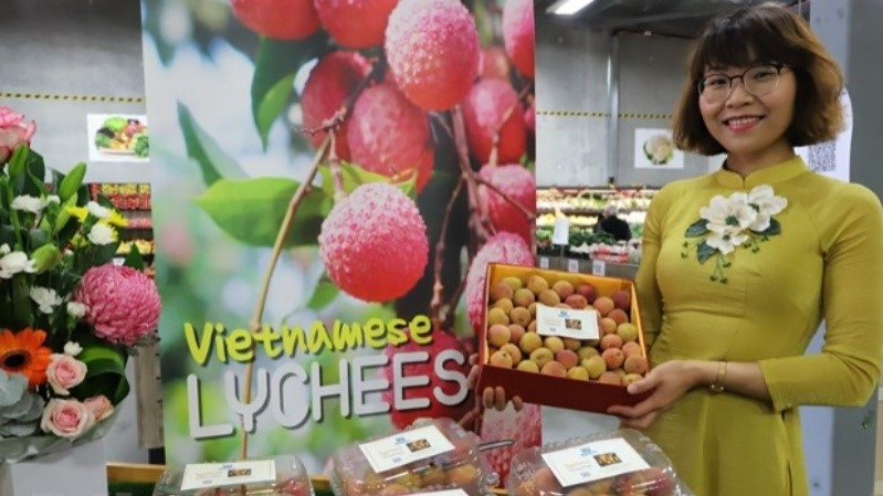 One kilogramme of Vietnamese fresh lychees was sold for AUD3,000 (US$2,254) at a special auction in Australia. Photo: VNA