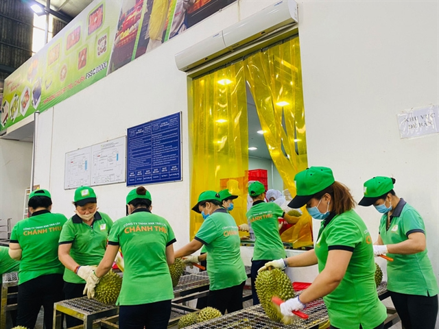 A fruit processing plant in the Cửu Long (Mekong) Delta. Photo: NLD