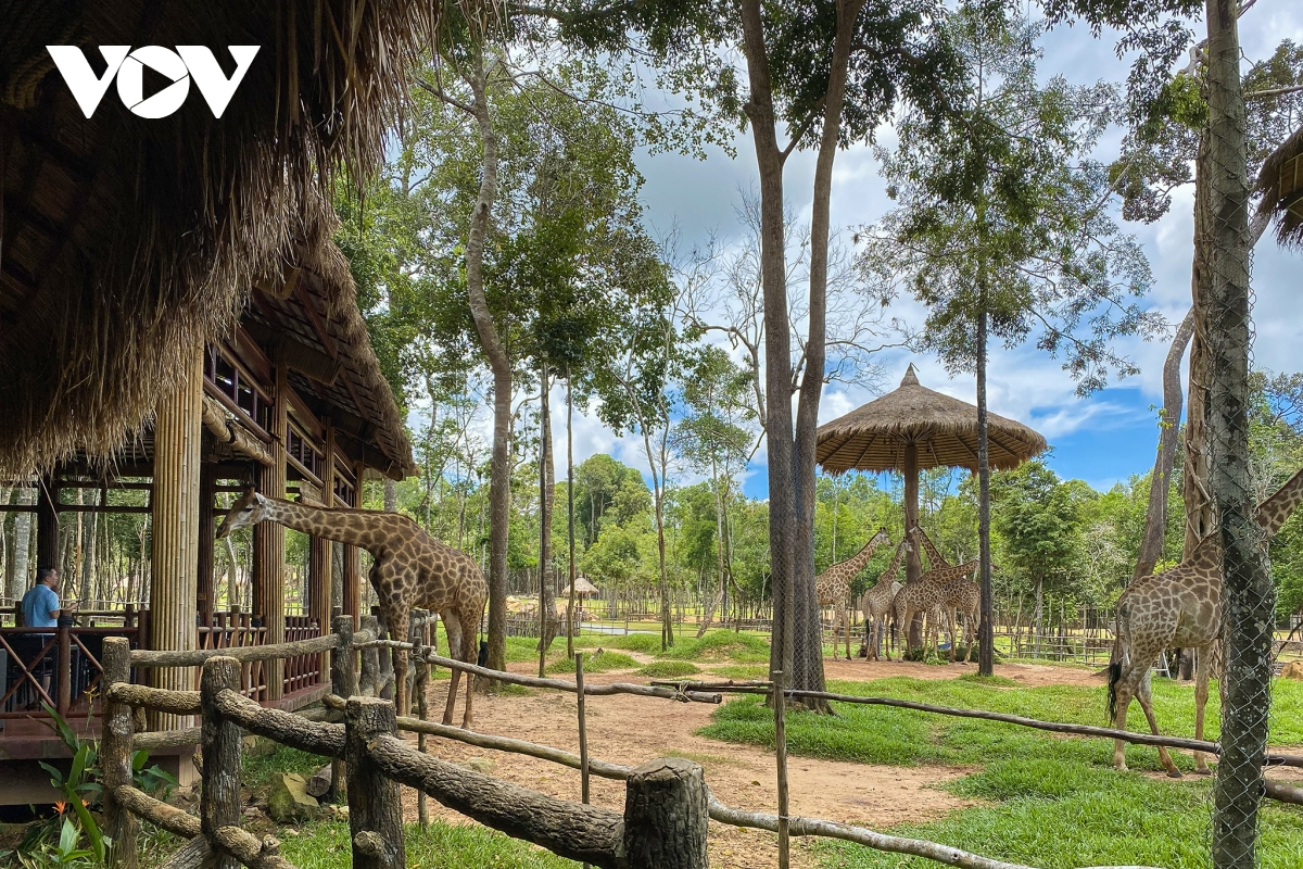 The semi-wild zoo in Phu Quoc is an attractive place for tourists. Photo: VOV