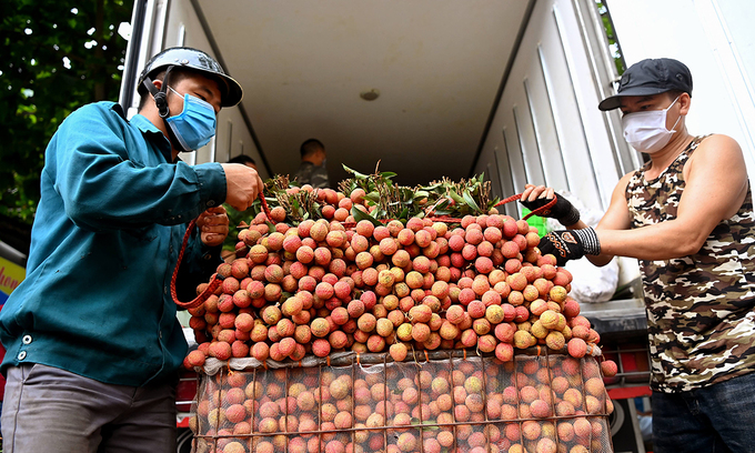 Farmers prepare lychee for distribution in the northern province of Bac Giang. Photo: VnExpress