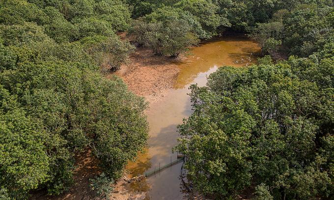 Ru Cha mangrove forest near Tam Giang Lagoon in Thua Thien-Hue Province. Photo: VnExpress
