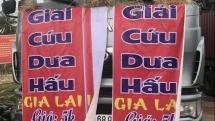 rok enterprises launch campaign supporting vietnamese fruit