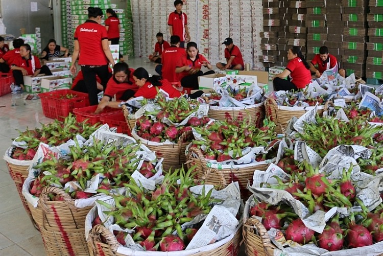long an province exports 50 tons of dragon fruit a day by sea