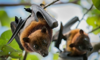 Vietnam imposes fines for transporting wildlife from epidemic areas