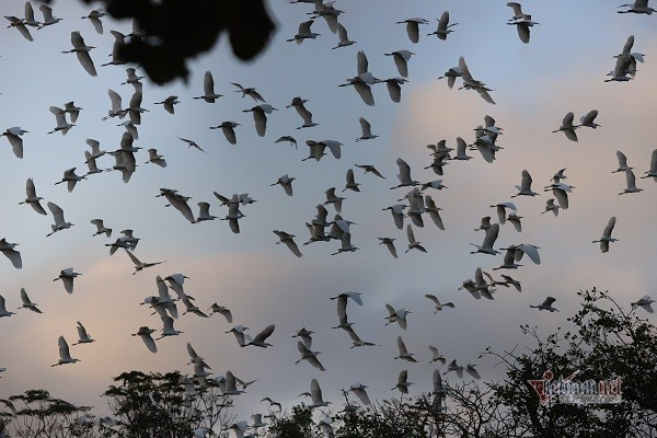 the stork flock which is considered as villagers treasure