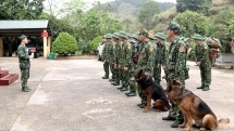 trained dogs used to prevent illegal entry to vietnam from china amid covid 19 combat